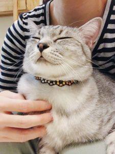 胸元を撫でられて気持ちよさそうな顔のサバトラ猫