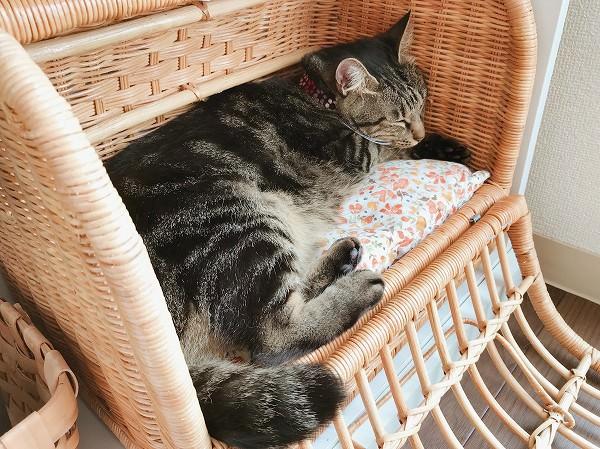 バスケットキャリーの中で寝ているキジトラ猫