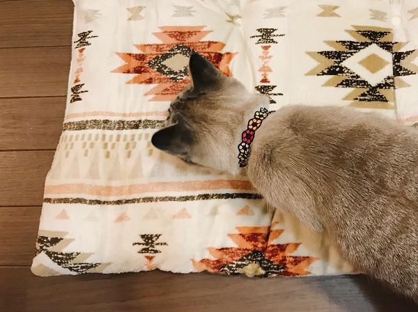 ニトリの長座布団は猫たちの冬のマストアイテム