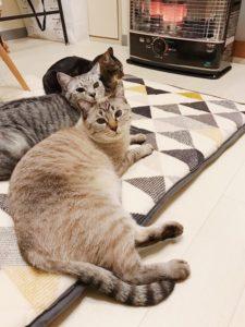ストーブの前に集まっている猫たち