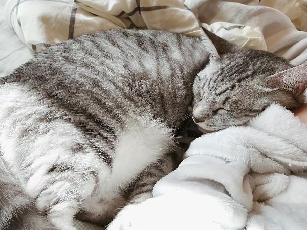 つられて眠る