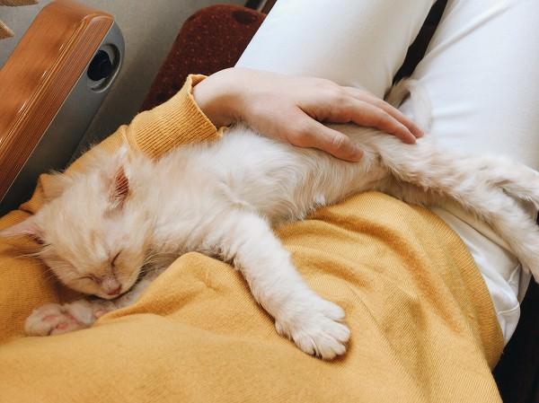 眠ってしまった子猫