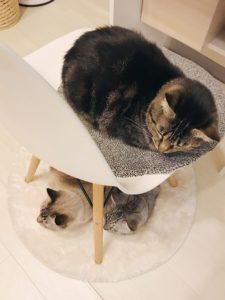 椅子の上と下に集合している猫3匹