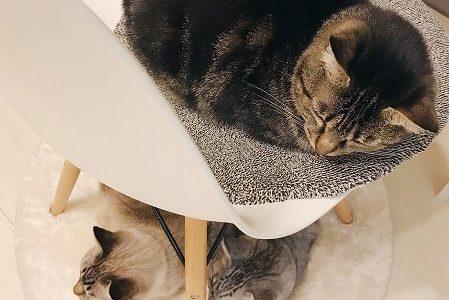 先住猫チームの反応