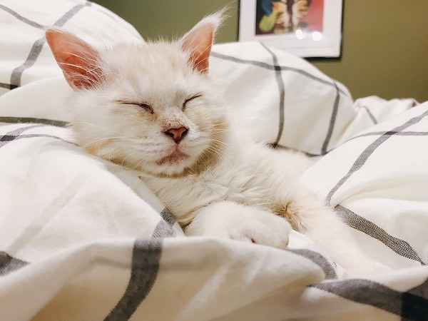 ねむたい子猫