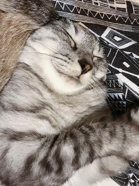 うれしそうな顔のサバトラ猫