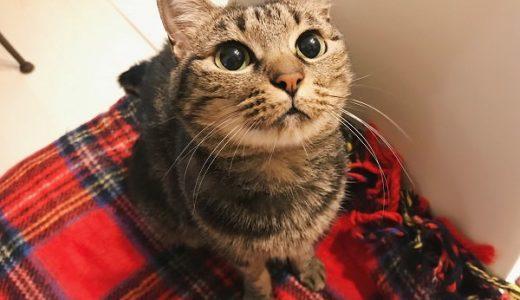 赤いチェック柄の電気毛布の上に座っているキジトラ猫