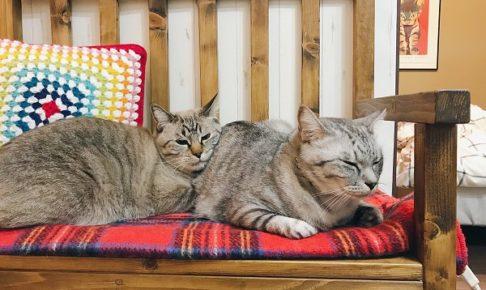 電気毛布の上で暖まっている2匹の猫
