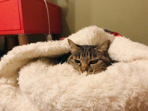 ふわふわの寝袋にすっぽり包まれているキジトラ猫