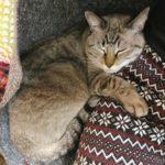 猫カビ大感染祭