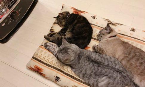 ストーブの前で寝そべっている3匹の猫たち
