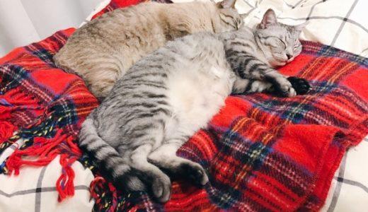 寝相が悪すぎる兄猫