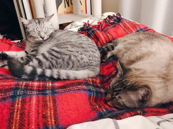ベッドの上で丸くなっている2匹の猫。