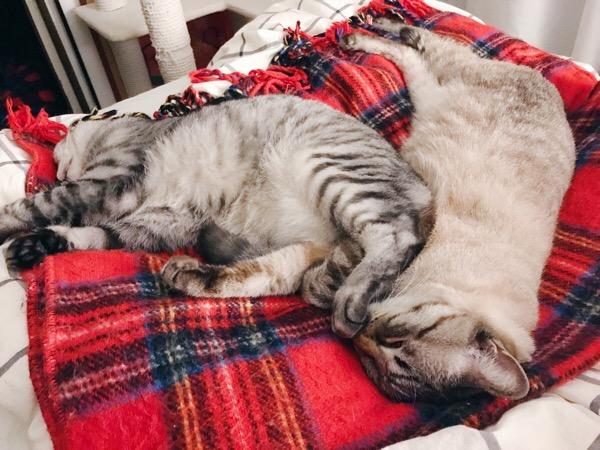 寝相が悪い兄猫。