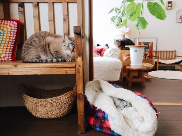 部屋の中に猫が3匹写っている写真。