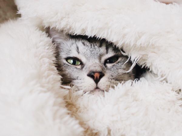 モコモコに包まれて暖かそう。