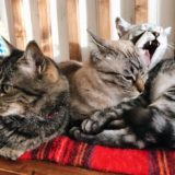 身を寄せ合う3匹の猫たち