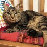 電気毛布の上で横になっている猫