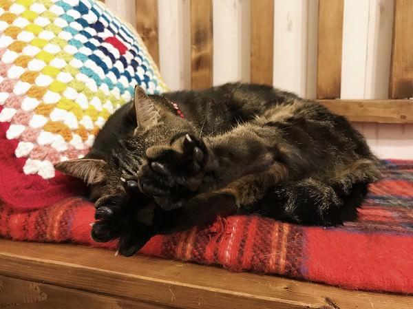 後ろ足を揃えて伸ばし、足の裏をパーにしている猫