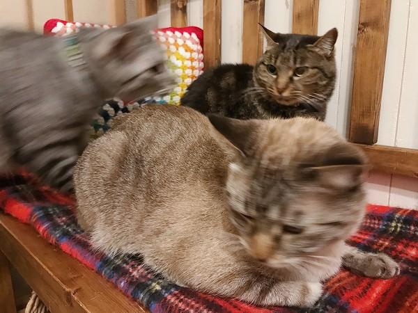 テト(サバトラ猫)が間に割り込んできた。
