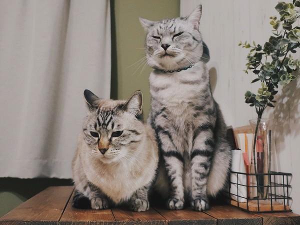 リラックスしている猫たち。