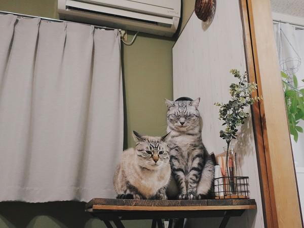 暖房の真下で温風を浴びている猫たち。