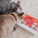 アイシア極楽ねこカレンダーのにおいを嗅いでいる猫たち。