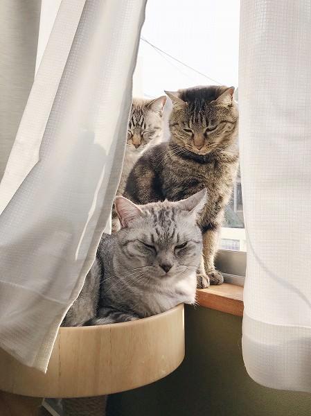 窓辺で日向ぼっこをしている3匹の猫。