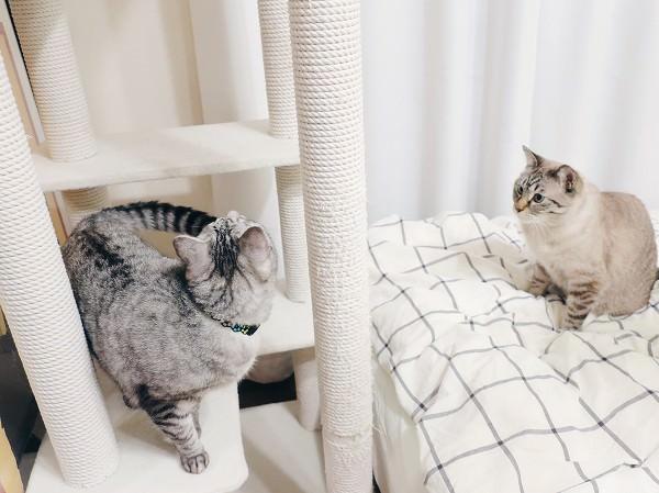 ベッドのすぐそばにあるキャットタワーと猫たち。