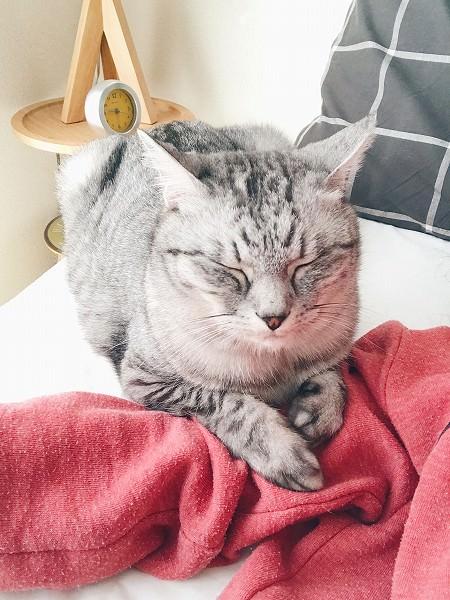 枕元でニンゲンが起きるのを待っている。