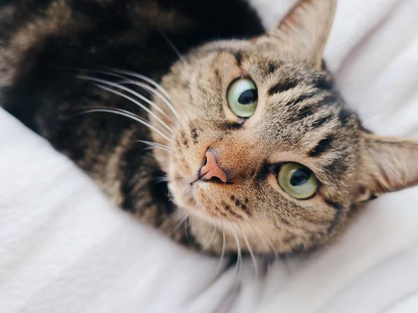 こっちを見上げている美人猫。