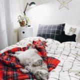 ベッドの上で寝っ転がっているテト(サバトラ猫)。
