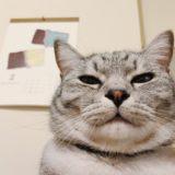 ふてくされた顔の猫とチョコレートのカレンダー。