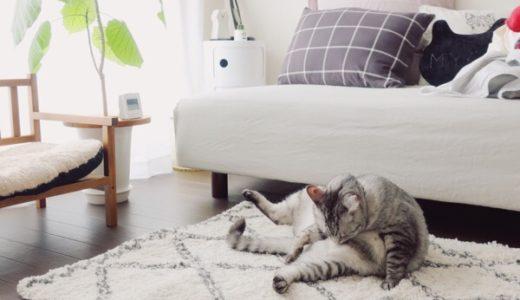 部屋と猫。