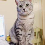 作業妨害してくる猫はウザ可愛い