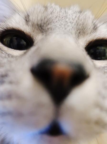 テトちゃんの顔の超ドアップ。