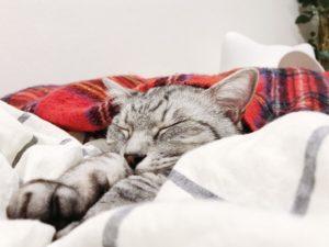 やっぱり寝る。