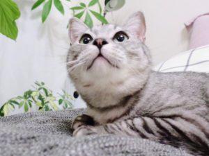 少し下から見た猫の顔。