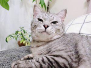 むすっとした顔の猫。