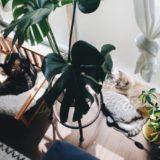 窓際で観葉植物といっしょに日光浴をしている猫たち。