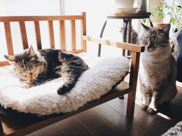 陽のあたるベンチで毛づくろいしているジーナ(キジトラ猫)。