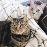 猫たちと二度寝する至福の時間