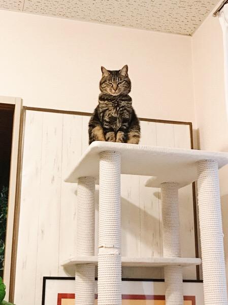 すごい威圧感を放っている猫。