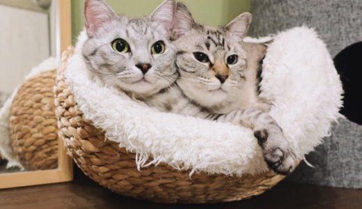 寝袋+カゴ=猫うっとりのモコモコベッドの完成
