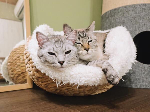 眠たそうな猫たち。