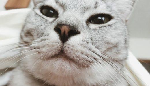 めざまし猫