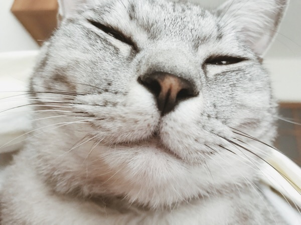 ドアップのテト(サバトラ猫)の顔。