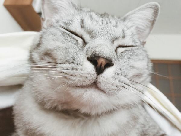 カリン様みたいな顔のテト(サバトラ猫)。