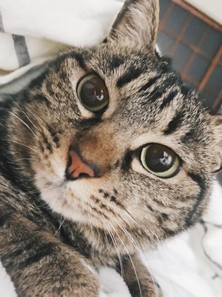 こっちをじっと見つめる大きな瞳。