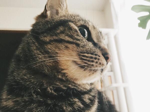 朝日に照らされるもふもふの猫。